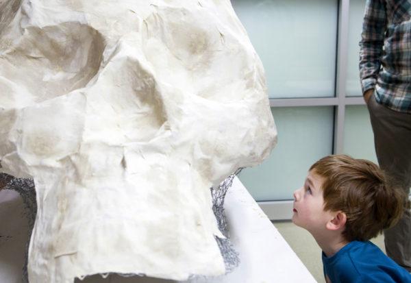 BDN image - skull