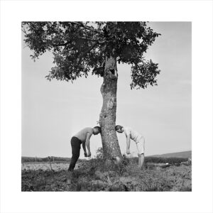 Two people and a tree